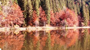 herbst_am_see
